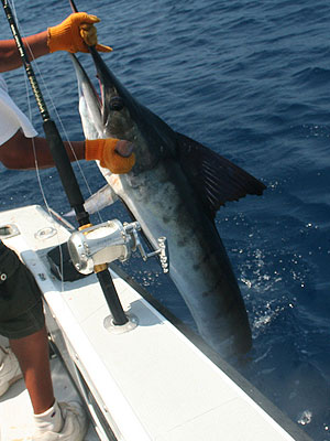 Nicaragua vacation package - Nicaragua Sport Fishing